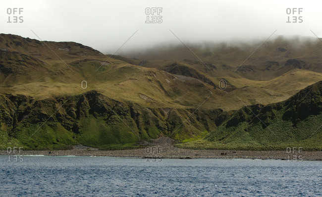 King Penguin colony, at Lusitania Bay, along the east coast of Macquarie Island, Southern Ocean