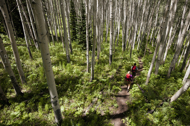 Couple hiking in forest, Beaver Ponds trail in the West Elk Mountains, Crested Butte, Colorado, USA