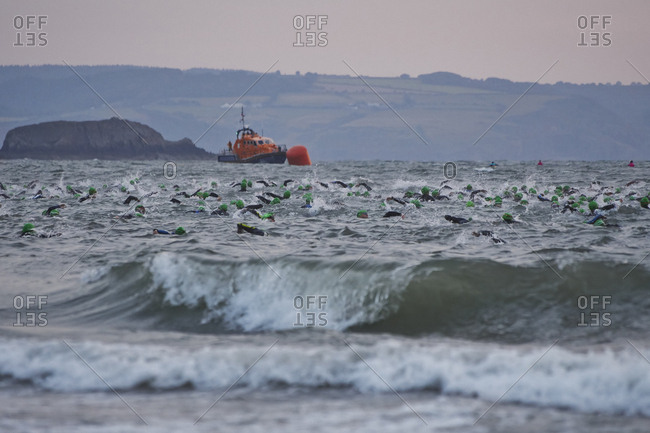 Large group of swimmers racing in sea, Tenby, Wales, UK
