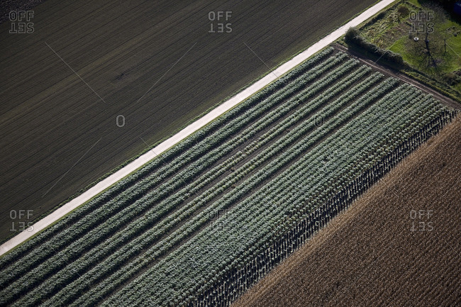 Aerial view of orderly field crops