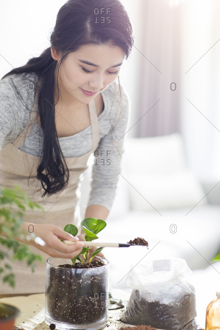 Young woman planting potted plant at home