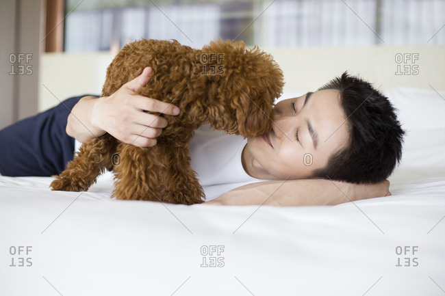 Young man playing with a pet poodle at home