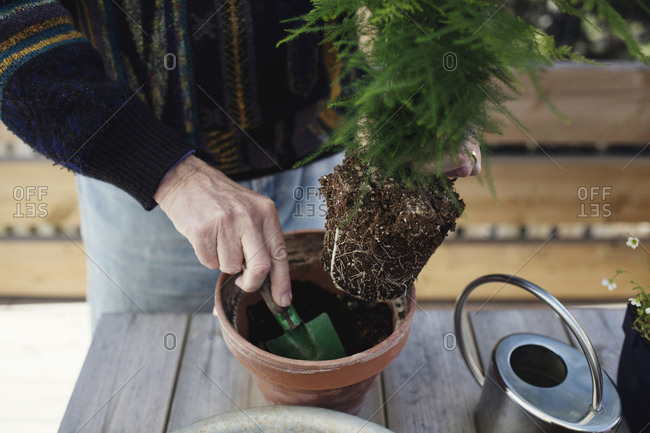 Midsection of senior man planting plant in pot at table