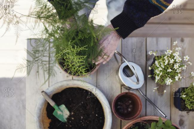 Cropped image of senior man gardening at table in yard