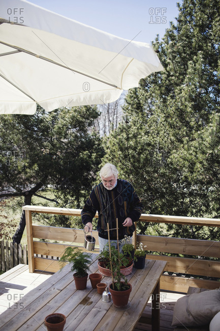 High angle view of senior man watering potted plants at table against trees