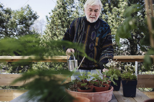 Senior man watering potted plants at table in yard