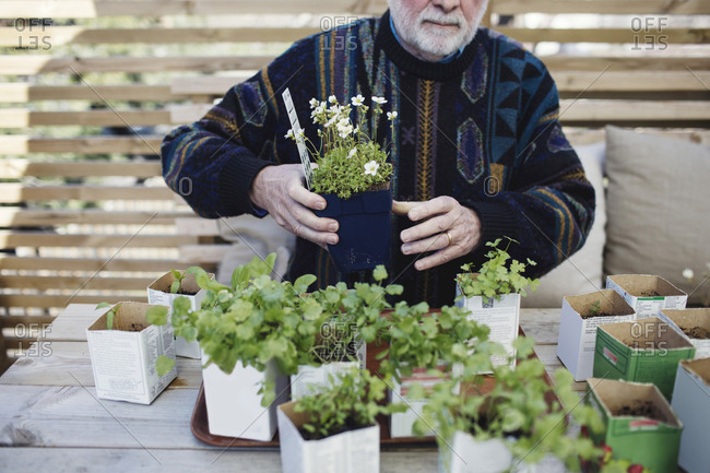 Midsection of senior man arranging various potted plants in tray at table