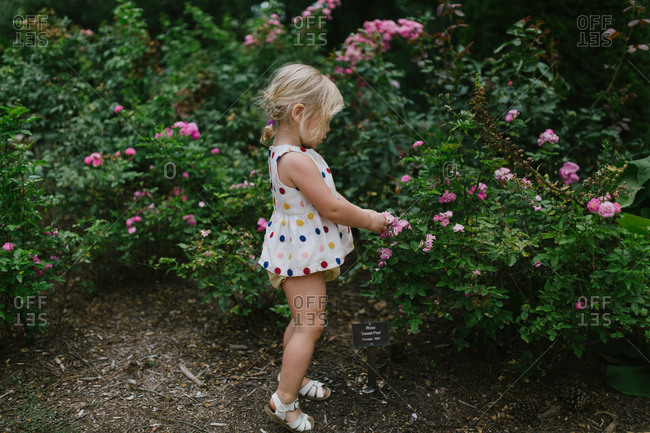 Toddler girl by flower bush