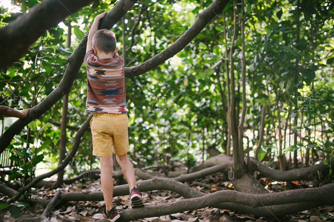 Boy climbing around tree branches
