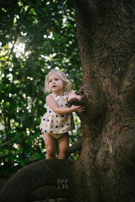 Toddler girl balancing on tree