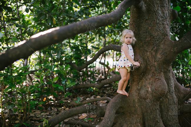Toddler girl balancing on tree branch