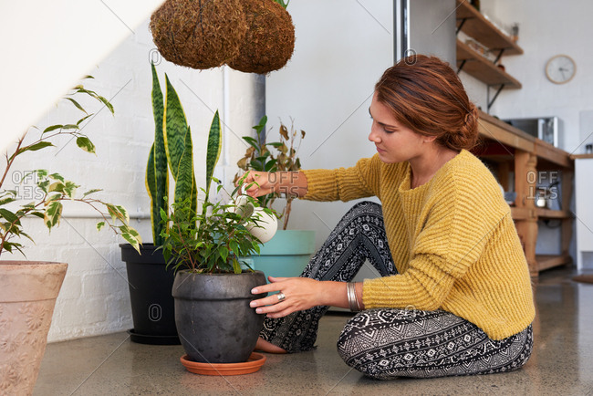 indoor gardener watering plants