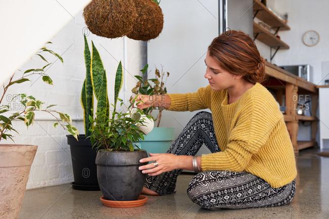 indoor gardener watering plants