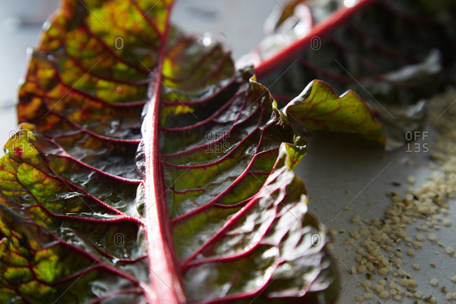 Close up of a red kale leaf