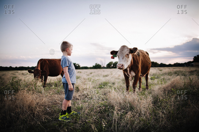 Boy looking at a cow