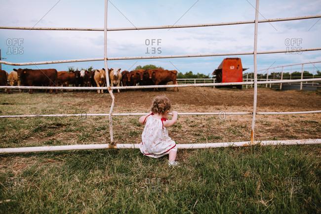 A little girl looking a herd of cattle in a pen