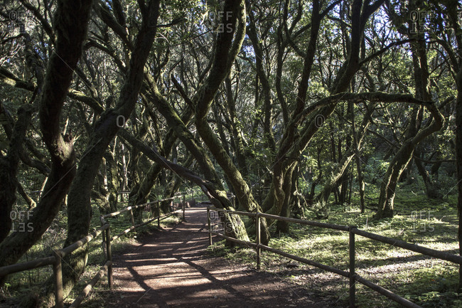 Rainforest on La Gomera, Spain