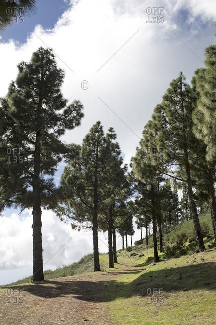 hiking trail 16 on La Gomera, Spain
