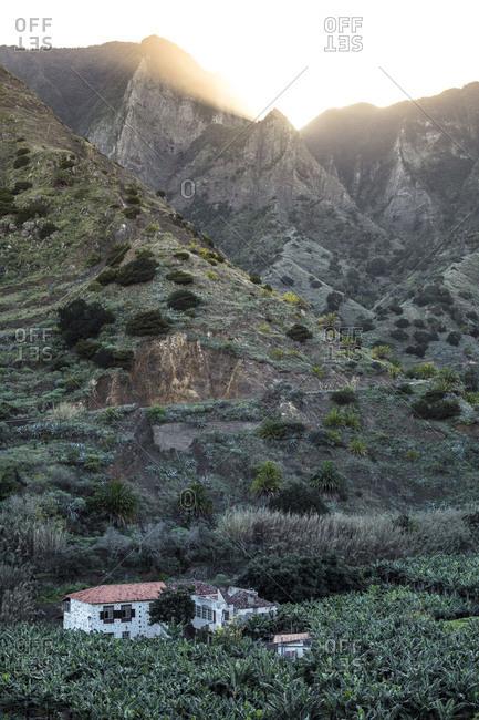View to banana plantation on La Gomera