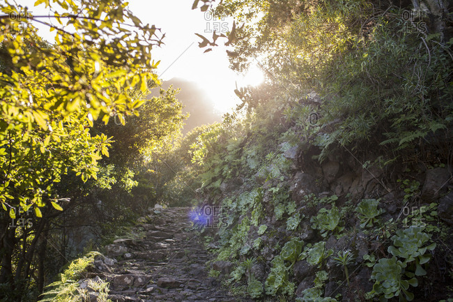 Footpath El Cedro at La Gomera Island