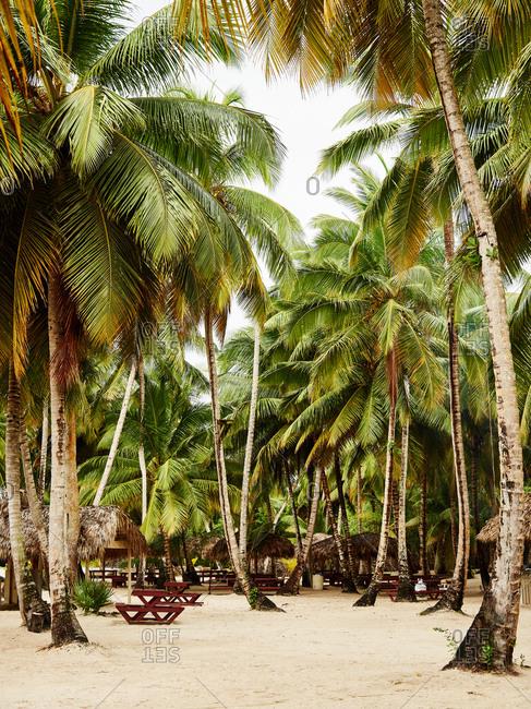 Picnic tables in beach area