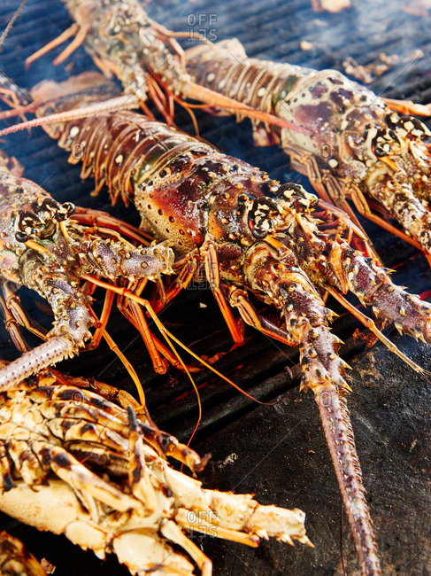 Lobsters cooking on a barbecue