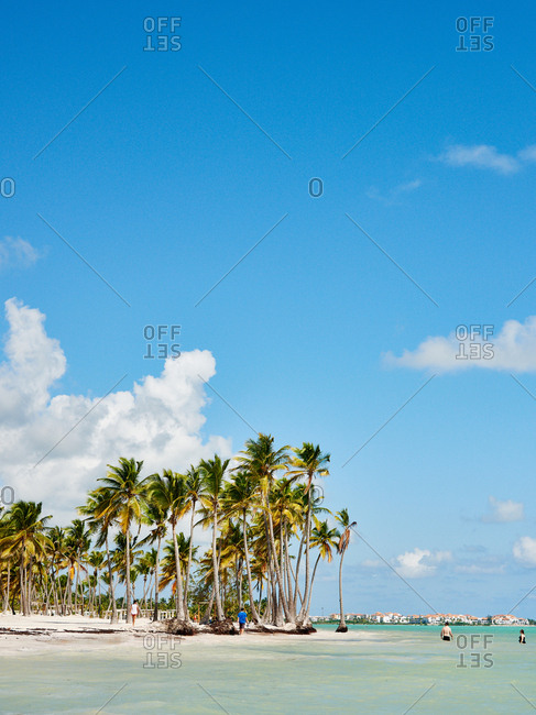 Palm trees on beach outcropping, Dominican Republic