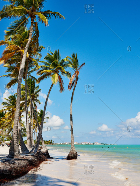 Palm trees lining beach, Dominican Republic