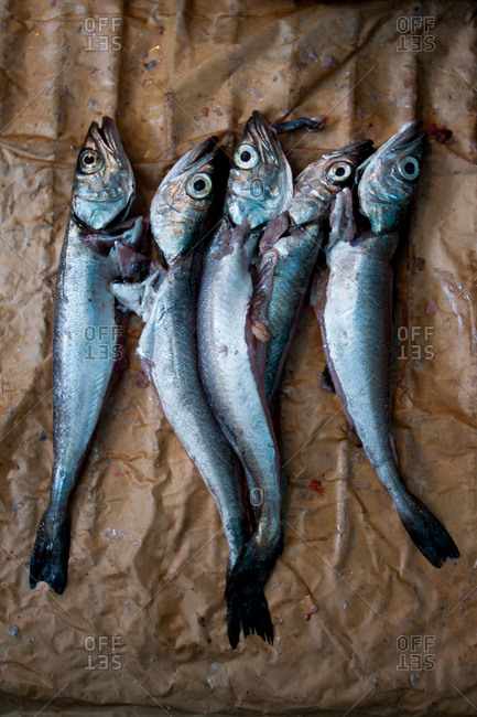 Fresh fish on brown paper in seafood market