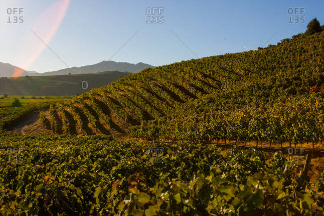 Hillside vineyards at dusk