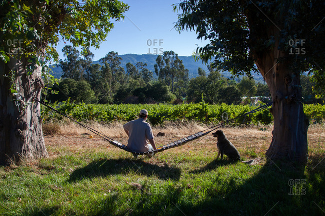 Man sitting on swing at vineyard with dog
