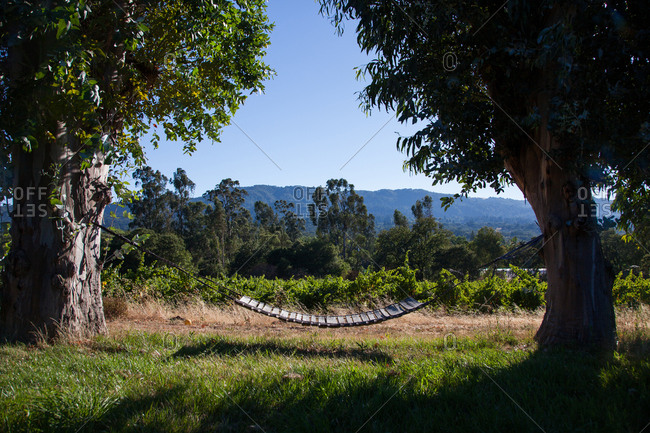 Swing between two trees in vineyard, California
