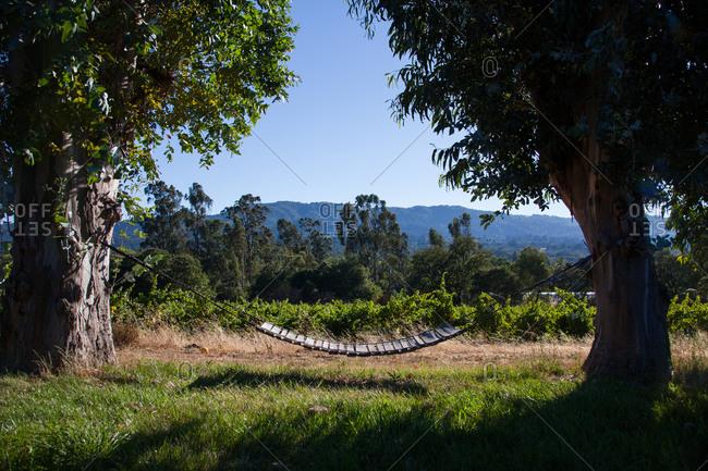 Swing between two trees in vineyard, California