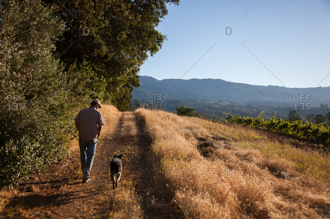 Farmer walking on path with dog in vineyard