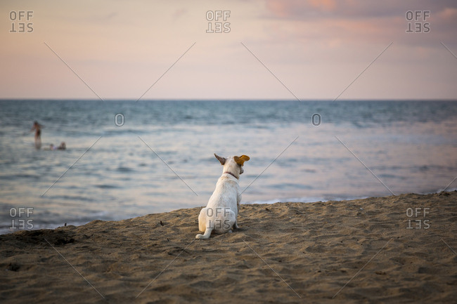 A lone dog takes in the view on the beach at sunset in Sayulita, Mexico
