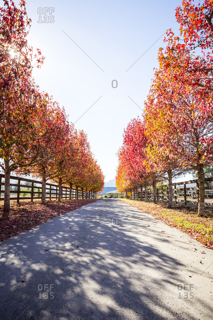 A fall scene in Point Reyes, California