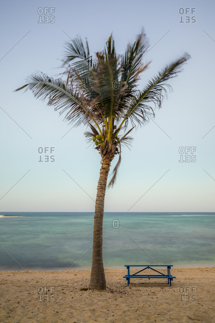 Palm tree and table by the ocean