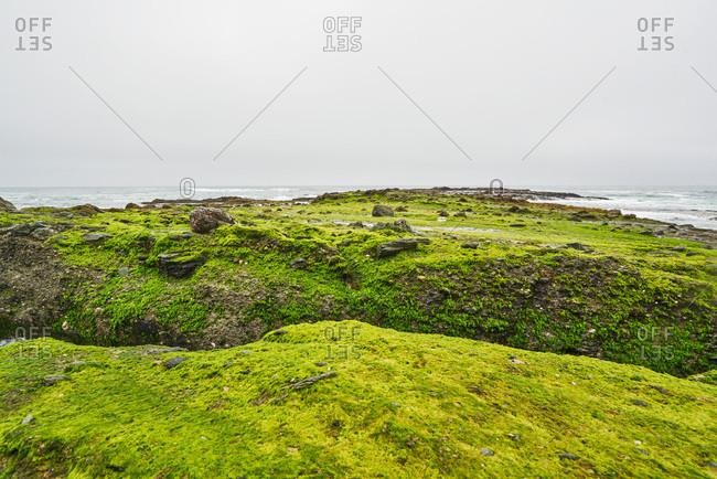 Algae-covered rocks in Laguna Beach, California