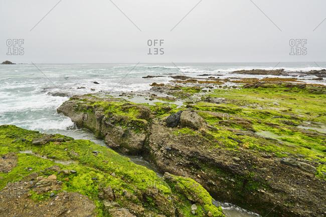 Waves crash on algae-covered rocks in Laguna Beach, California
