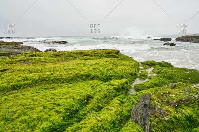 Rocks covered in green algae on the ocean