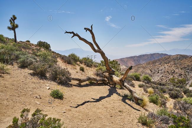 Fallen tree in the desert, Joshua Tree National Park