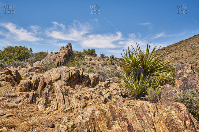Rock formations and yucca plants at Joshua Tree National Monument