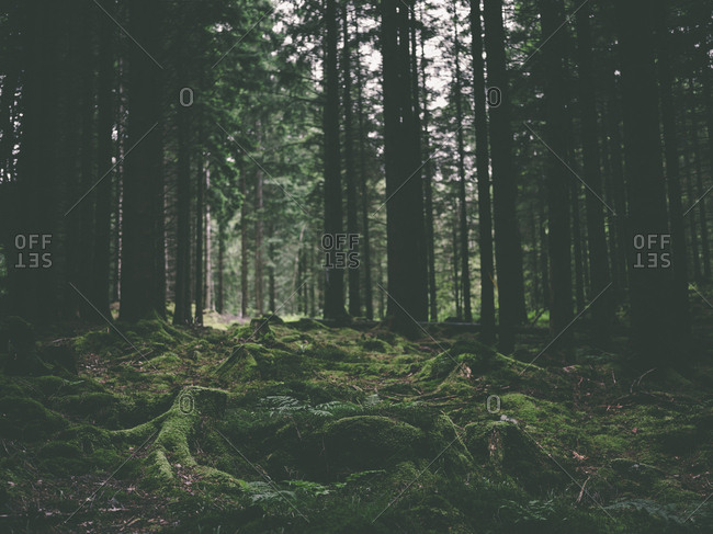 A mossy forest bed