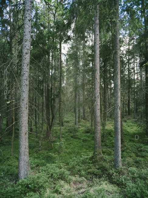 A verdant forest
