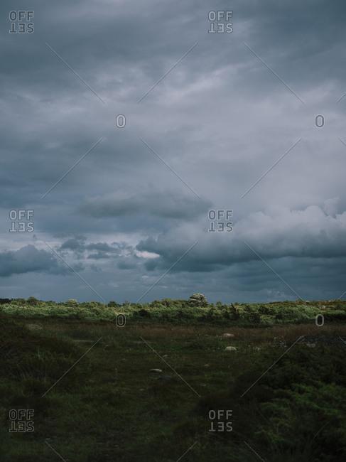 Dark skies above the taiga