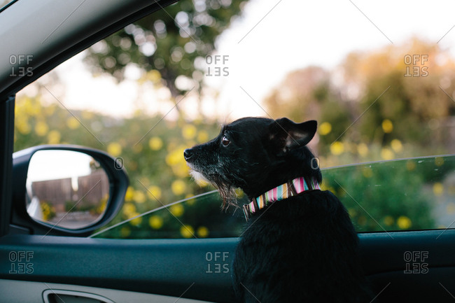 Dog looking away while sitting in car