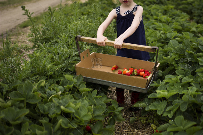 Low section of girl holding basket with strawberries while standing on field