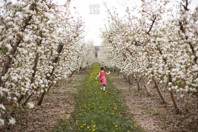 Rear view of girl holding flower while walking on grassy field amidst cherry trees