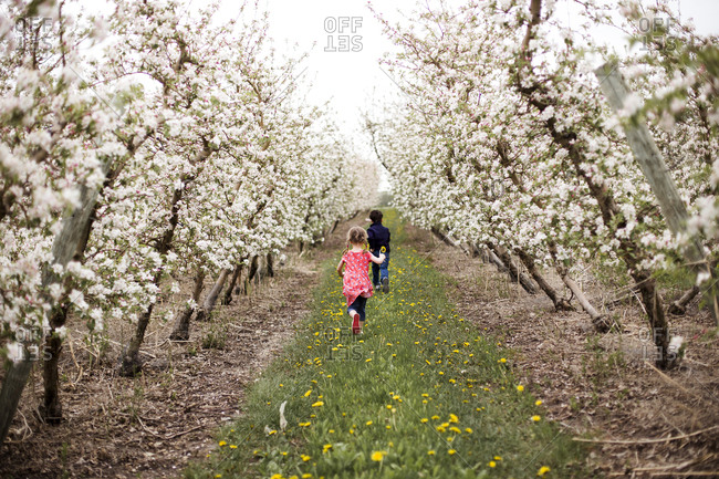 Rear view of siblings walking on grassy field amidst cherry trees against sky