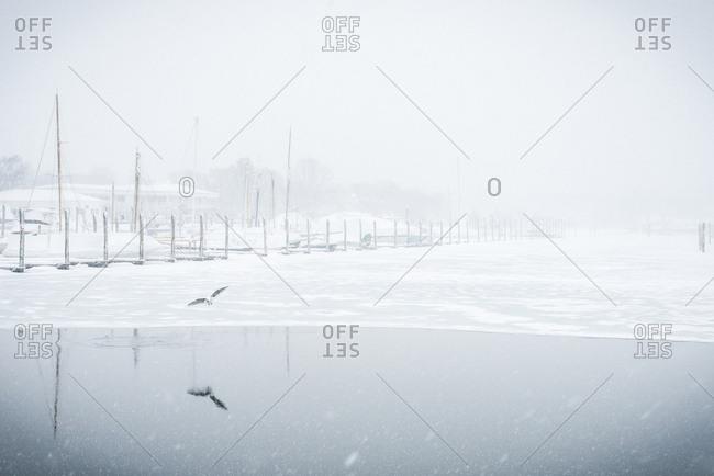 Bird flying over frozen lake during snowfall